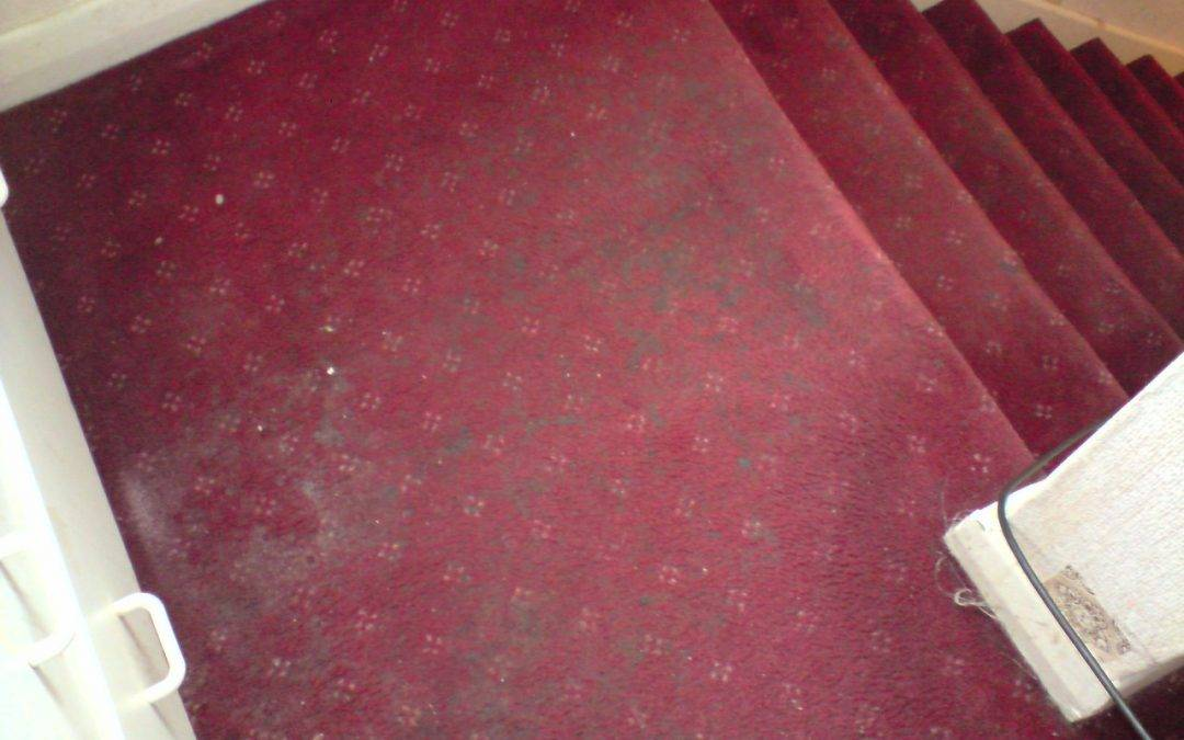 Stairs carpet cleaning in Wetherby